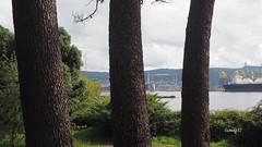 Entre pinos. (lumog37) Tags: estuary ra paisaje landscape barcos ships