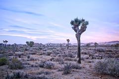 Scorched (PatrickJamesPhoto) Tags: joshuatree park nationalpark california desert pentax k5 sunset