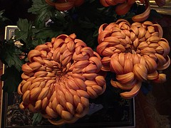 #Chrysanthemum (RenateEurope) Tags: ipadair2 iphoneography flowers plants nature chrysanthemum awesomeblossoms
