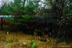 DSC_1617 (andrzej56urbanski) Tags: chernobyl czaes ukraine pripyat prypeć kyivskaoblast ua