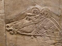 Horse (Aidan McRae Thomson) Tags: nineveh relief britishmuseum london assyrian sculpture mesopotamia ancient