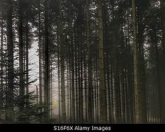 Photo accepted by Stockimo (vanya.bovajo) Tags: stockimo iphonegraphy iphone fog forest foggy weather trees tree wood woods nature mist mystic mystery mysterious dark darkness fairy nobody scary scared