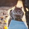 Kitty Cat... (Alcosinus  On-Off ) Tags: alcosinus nikond90 chatderue streetcat carrée square