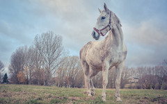 Horse 3322- (EbE_inspiration) Tags: horse nikon nikond7100 nature outdoor outside white d7100 sigma