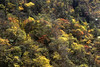 Autumn colors (MelindaChan ^..^) Tags: sichuan china 四川 川西高原 新都橋 chanmelmel mel melinda melindachan tibetan