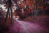 Affinity (Anthonypresley1) Tags: illinois anthony presley old retro vintage red autumn fall dark anthonypresley