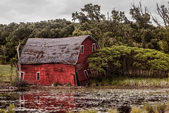 Sinking barn in Zimmerman (michaelraleigh) Tags: autumn serene closeup reflection vintage canon fall red longshot 100300mm sinking secluded barn pinetrees hidden sinkingbarn highquality f56l outdoors green canoneos5dmarkii infocus blurred minnesota