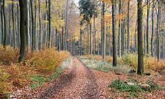 08-IMG_7033 (hemingwayfoto) Tags: buchenwald freizeit herbst herbstlaub mittelgebirge november taunus wald wanderung weg