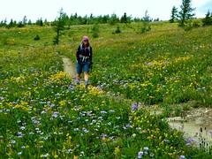 7-089 (Gnarlene) Tags: flower hiking banff healypass monarchramparts