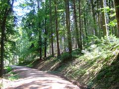 DSCF0832 (JohnSeb) Tags: trees tree forest germany deutschland rboles bosque arbre schwarzwald baum fort badenweiler johnseb bumen eurotour2012