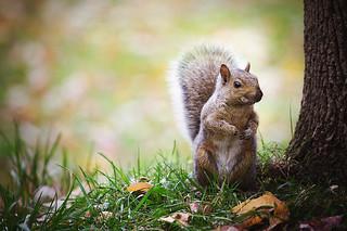 Squirrels adventures