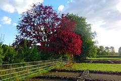 Roman Autumn (Dave Roberts3) Tags: autumn sky fall wales clouds fence bricks historic newport gwent caerleon coth supershot citrit