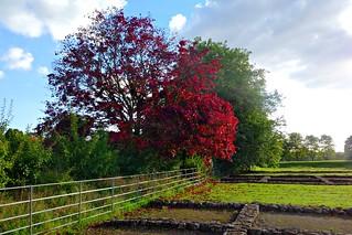 Roman Autumn