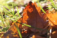 I solens sken (hildur_76) Tags: höst fotokurs