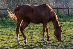 Balade dans la nature (Pierre ESTEFFE Photo d'Art) Tags: france nature fleur cheval soleil eau arbre vgtation loiret45 pithiviersleviel