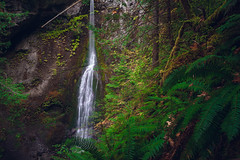Marymere Falls (Bryan Buchanan) Tags: longexposure plants forest waterfall washington portangeles falls pacificnorthwest olympicnationalpark pnw marymere crescentlake sonya7ii