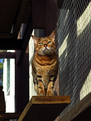 Nadia Cat Cage G16 (Boneil Photography) Tags: pet cat canon nadia powershot f4 g16 305mm boneilphotography brendanoneil