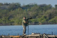 Cimarrones salineros (Gogolac) Tags: birdphotography dominicanphotographers dominicanwildlifephotographer wildlife wildlifephotography cimarrones