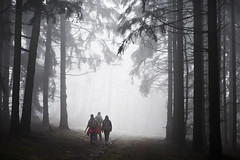 .... (a.penny) Tags: trees mist haze nikon nebel hessen forrest wald bume taunus baum rheingau hohe dunst kreis kanzel apenny niedernhausen aw120