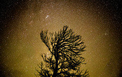 Golden Stars (Swilso37) Tags: night 50mm nikon nightshot astrophotography