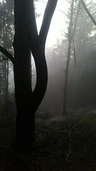 Hutwisch im Nebel 4