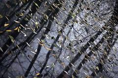 Au fil de l'eau (Gerard Hermand) Tags: 1512130356 reflection gerardhermand france paris eos5dmarkii arbre ciel eau feuille leaf pond reflet reflexion sky tree water etang etangsdelaminiere canon