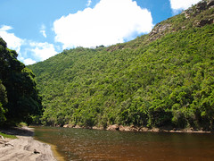 Touws River (goodbyetrouble) Tags: africa park wild green nature river garden south natur route national jungle wilderness grn ufer fluss sdafrika urwald djungel touws touwsrivier