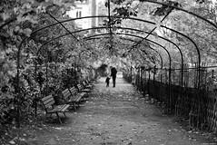 La lecon de choses (Mathieu HENON) Tags: leica m240 50mm noctilux france paris noirblanc blackwhite jardin parc pergola catherine labour