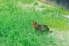 Today's Cat@2016-10-14 (masatsu) Tags: cat thebiggestgroupwithonlycats catspotting pentax mx1 osaka