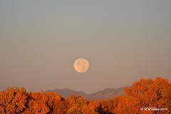 October 16, 2016 - The setting Harvest Moon. (Ed Dalton)