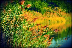 Autumn in South Jersey (dianealdrich - Please read my profile) Tags: southjersey southernnewjersey newjerseytnc10 newjersey stowecreek water scene serene autumncolor autumn creek landscape ♥naturelover♥ natureconservancy nature