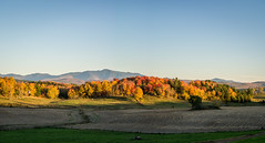 From Fairfax (Nick DiRico) Tags: vt vermont fall autumn manfsfield mountain field sunset foliage nikon d7100 landscape sigma 1750 pano panorama hdr outlook
