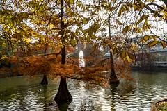 Colores de Otoo (Merly_gon) Tags: yellow sunset luz colores atardeceres espaa madrid reflejos arboles verde agua otoo jardin hojas sonya7 alpha7 contraluz