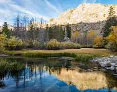 North Bishop Creek 1 (dennisjohnston17) Tags: sierra creek aspens reflection eastern bishop morning high mountain fallfoliage