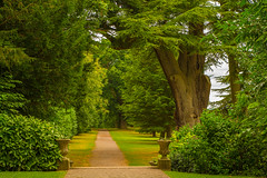 Inviting.........A lovely Place To Start A Walk (williamrandle) Tags: woodlands handburyhall droitwichspa droitwich worcestershire uk england 2016 summer countryestate path walk oaktrees shrubs steps outdoors vista landscape trees plants nikon d7100 tamron2470f28vc beauty serene peaceful