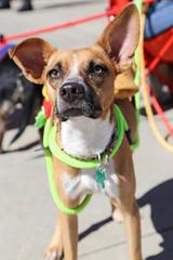 rogo-5734 (angelsrescue) Tags: aau pets angels among us pet rescue alpharetta ga dog love