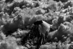 Pico de Orizaba Veracruz (DROSAN DEM) Tags: pico de orizaba veracruz mexico volcam vulcano nieve snow cloud nube cielo sky
