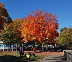 Parc Montmorency - Quebec (Jacques Trempe 2,490K hits - Merci-Thanks) Tags: quebec canada parc park montmorency fall automne couleur colour arbre tree