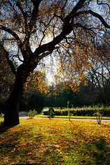 Contre-jour (RS...) Tags: automne autumn arbre tree herbe grass feuilles leaves d300