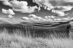 Clouds, Grass and Fields. (dshoning) Tags: clouds fields grasses fall washington palouse