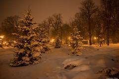 03-12-2016-4.jpg (Elen_L) Tags: december europe kharkov park beauty city evening ice lights nature snow travel walk winter украина харьков вечер город декабрь зима красота мойгород мороз огни прогулка снег