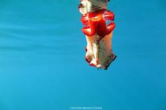 IMG_0197 copy (Aaron Lynton) Tags: spanish dancer snorkel scooter maui hawii hawaii canon g1x spanishdancer turtle honu tako octopus ocean animals papio yellowspotpapio starfish