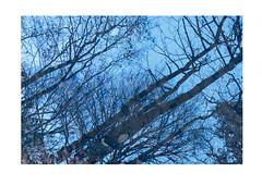 reflection2 (catt1871) Tags: lakedistrict lakes landscape autumn derwent brandelhow photomerge