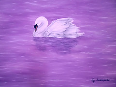 Grace (Faye Anastasopoulou) Tags: swan swans lake lakes scene scenes bird birds nature natural environment purple lavender violet water big grace graceful fantasylike peaceful atmosphere life living morning outdoors scenic scenery dreamlike poetic beauty beautiful unique artistic painted decor decorative decoration color colors colour background fantasy contemporary modern virtual with white fine art oil wall awesome cool image images painting paintings