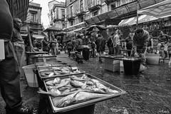 _DSC2678 (artlele) Tags: catania mercato market blackandwhite black white traditional sicilia sicily italia italy history streetphotografie street streetlife fishermen fish life true truelife work fishmarket reportage