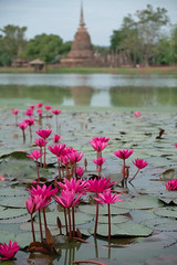 Water Lillies (fredMin) Tags: lotus asia thailand sukhothai xt1 fujifilm fuji temple wat lake flower lilly water