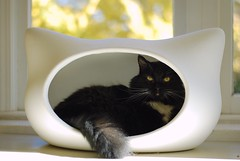 This is the first time I have seen Batman in the Whiskas bed. I think it suits him. (rootcrop54) Tags: batman tuxedo male long hair longhair black whiskascatheadbed whiskas bed gingko tree fall color autumn whiskers bokeh cc100 cc300