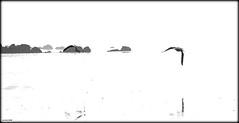 Minimalisme... (crozgat29) Tags: jmfaure crozgat29 mer monochrome canon plage beach mouette nature nb sea seascape
