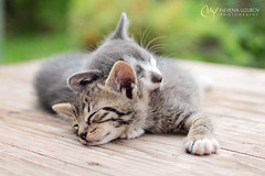Nevena Uzurov - Summer memories (Nevena Uzurov) Tags: nevenauzurov serbia kittens coth5