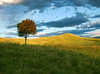 Amazing autumn (Sargis davtyan) Tags: mountain autumn tree outdoor green sky clouds yellow bliss
